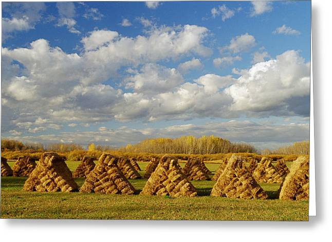 Stacked Hay Bales In Field, Selkirk Greeting Card by Dave Reede