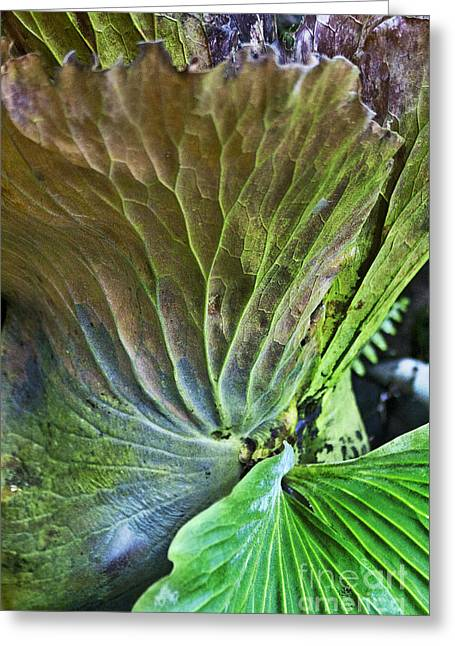 Staghorn Fern  Greeting Card by Heiko Koehrer-Wagner
