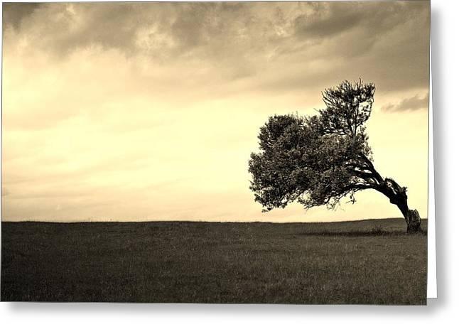 Stand Alone Tree 1 Greeting Card by Sumit Mehndiratta