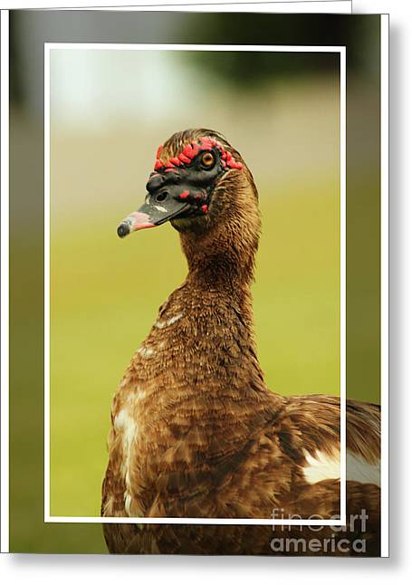 Greeting Card featuring the photograph Standin Proud by Lori Mellen-Pagliaro