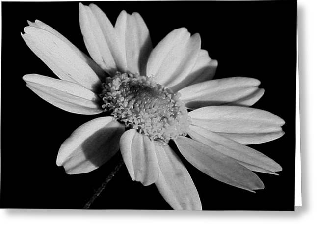 Greeting Card featuring the photograph Standing Alone by Karen Harrison