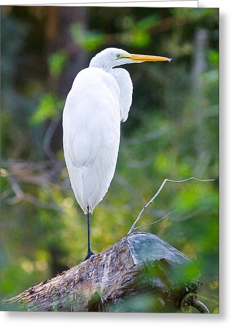 Standing Egret Greeting Card