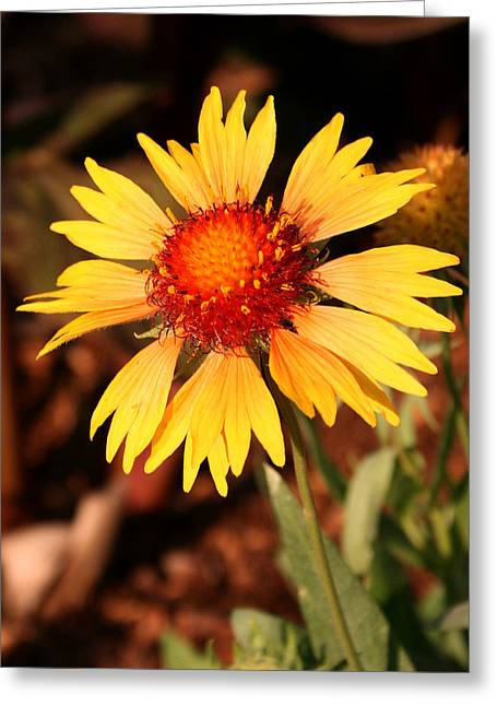 Greeting Card featuring the photograph Standing Tall by Karen Harrison