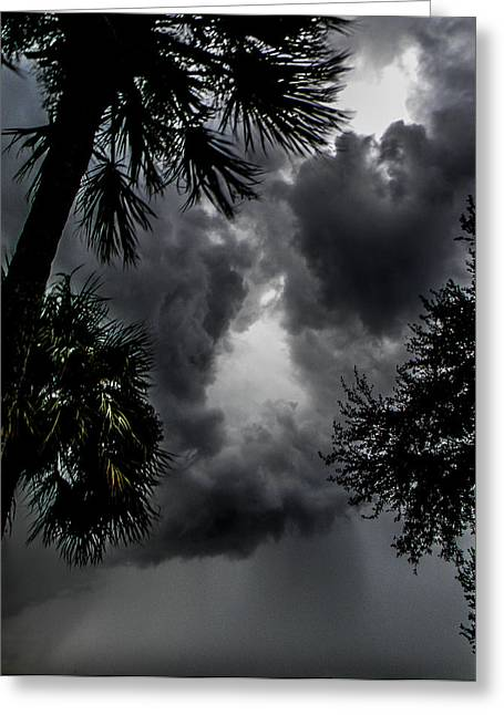 Standing Through The Storm Greeting Card by Christy Usilton