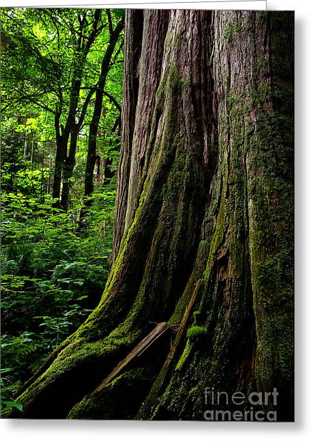 Stanley Park Trees 1 Greeting Card by Terry Elniski