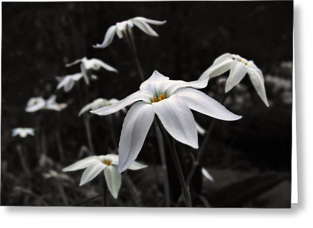 Greeting Card featuring the photograph Star Flowers by Deborah Smith