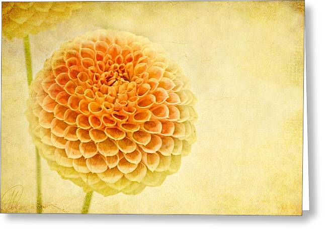 Star Of The Show Greeting Card by Margaret Hormann Bfa