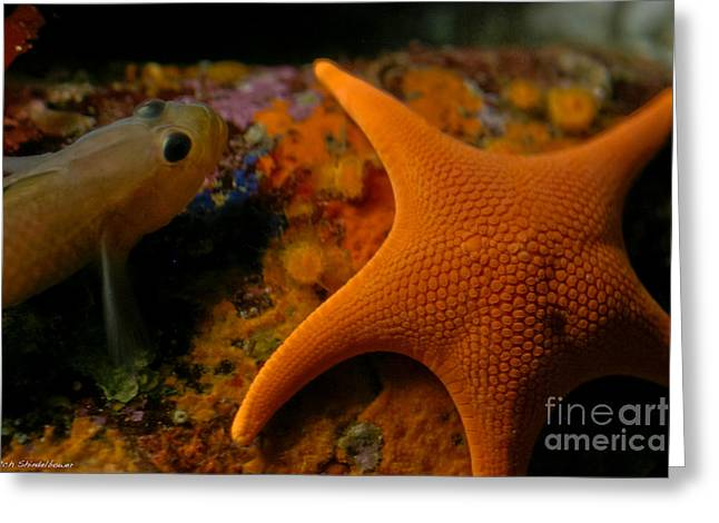 Starfish And Friend Greeting Card by Mitch Shindelbower