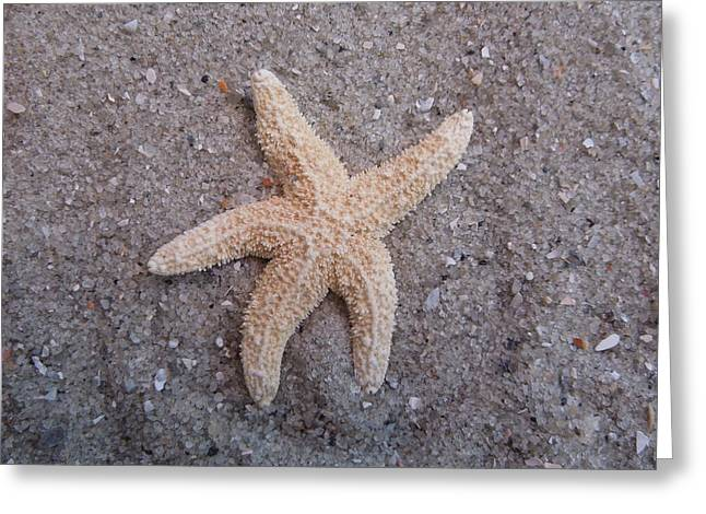 Starfish Greeting Card by Chad and Stacey Hall