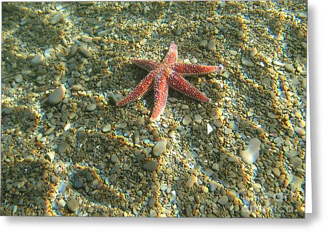 Starfish In Shallow Water Greeting Card by Ted Kinsman