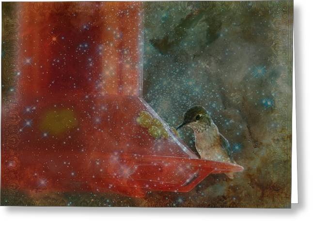 Stargazing Hummer Greeting Card by Cindy Wright
