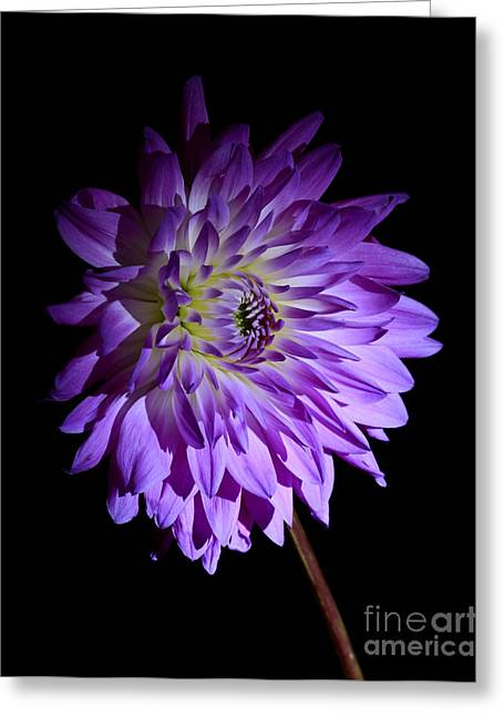 Starlight Star Bright Greeting Card by Inspired Nature Photography Fine Art Photography