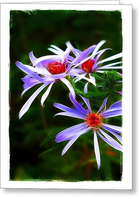 Stars Of Spring Greeting Card by Judi Bagwell