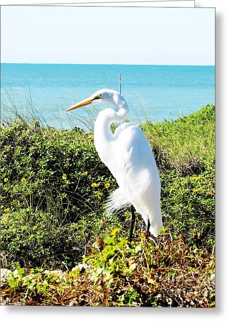 Statuesque Heron Vanilla Pop Greeting Card