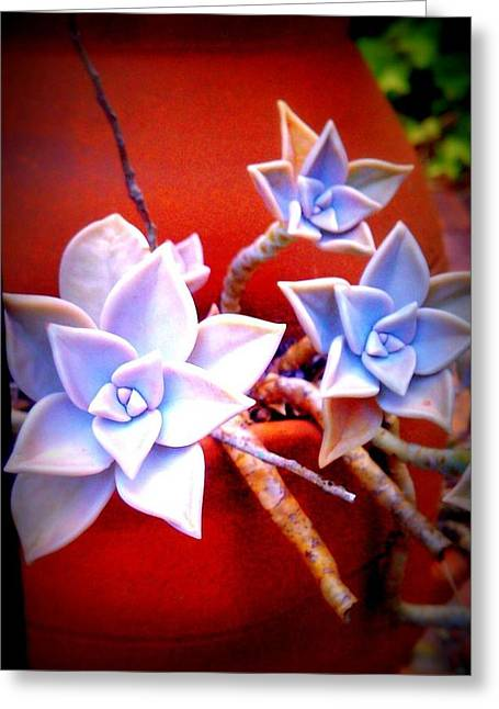 Stick Flowers Greeting Card by Jessica Thomas