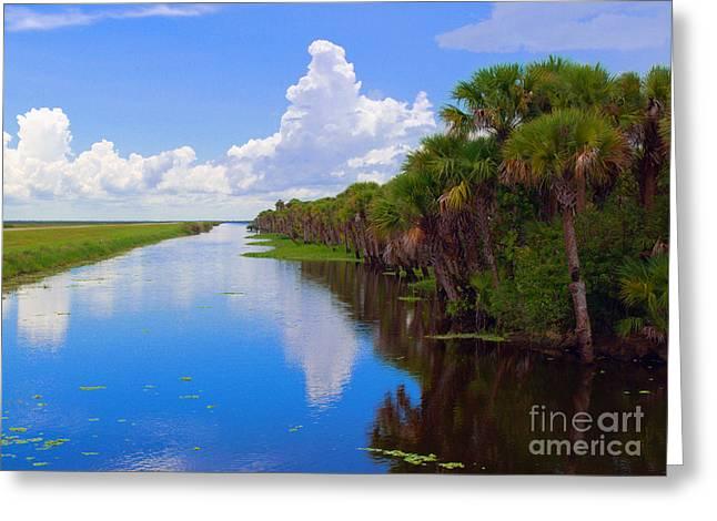 Stick Marsh In Florida Greeting Card