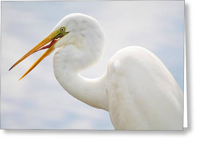 Sticking Out His Tongue Greeting Card by Paulette Thomas