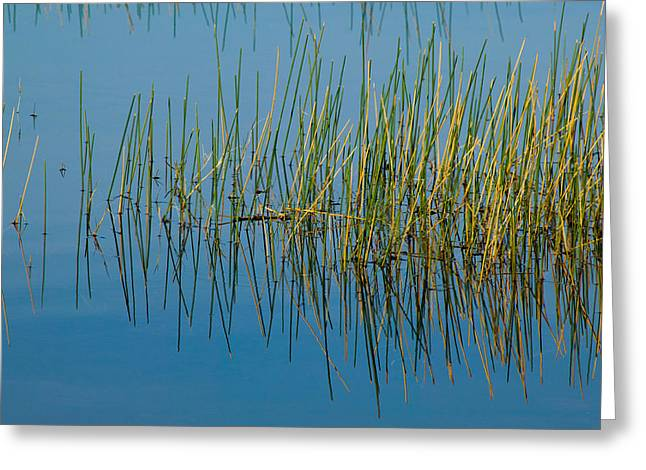 Still Water And Grasses Greeting Card by Rich Franco