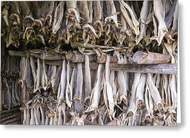 Stockfish, Norway Greeting Card by Dr Juerg Alean