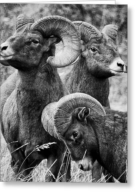 Stoic Horns Greeting Card by Kevin Munro