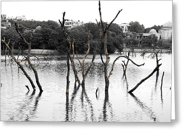 Tress Prints Greeting Cards - Stomps Of Trees In A Lake Greeting Card by Sumit Mehndiratta