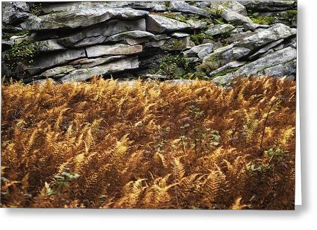 Stone Wall And Fern Greeting Card