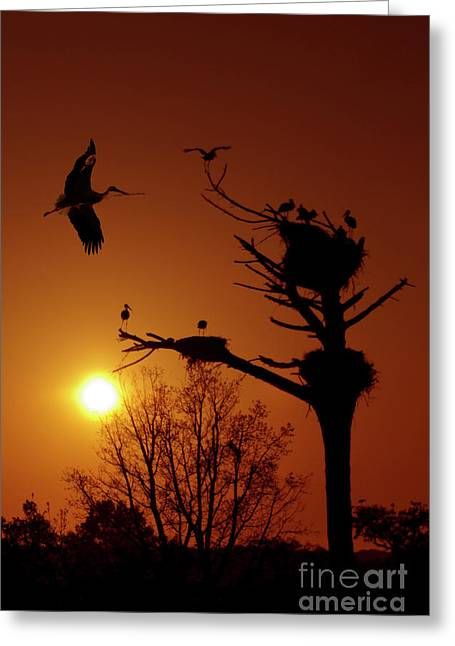 Storks Greeting Card by Carlos Caetano