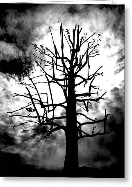 Storm Tree Greeting Card