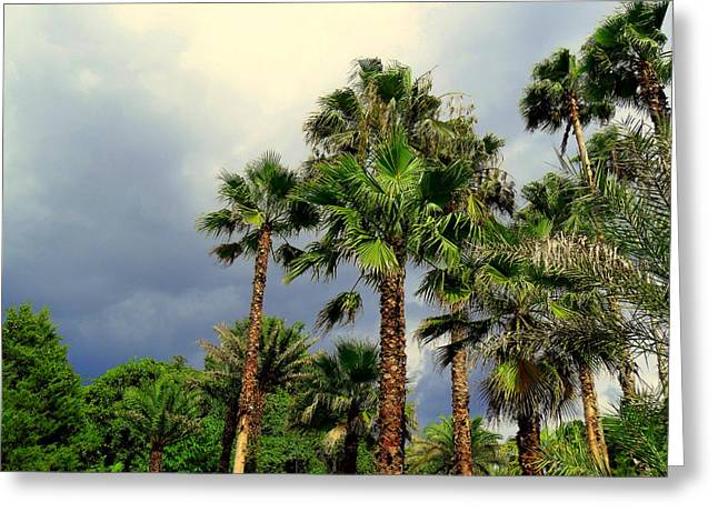 Stormy Skies And Palms Greeting Card by Sheri McLeroy