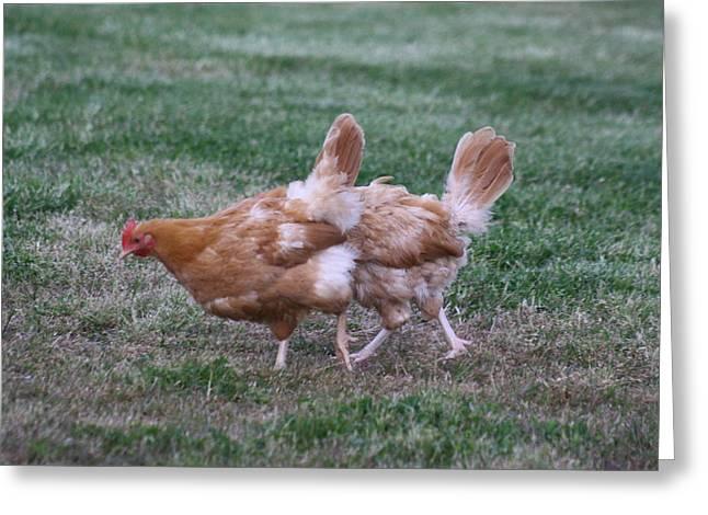Strange Chicken Greeting Card