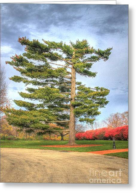 Strangely Shaped Tree At Cincinnati Observatory Greeting Card