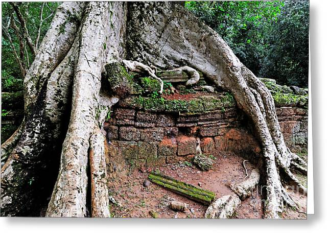Strangler Fig Tree Roots On Ruins Greeting Card by Sami Sarkis