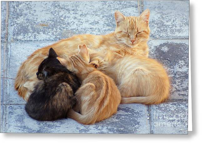 Stray Cats 3 Greeting Card
