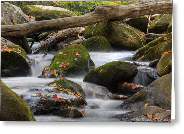 Stream Of Thought Greeting Card
