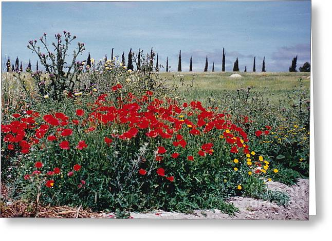Striking Spanish Scenery Greeting Card by Barbara Plattenburg