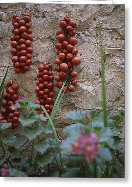 Strings Of Tomatoes Dry On A Wall Greeting Card