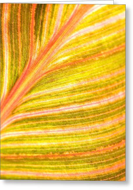 Striped Leaf Greeting Card