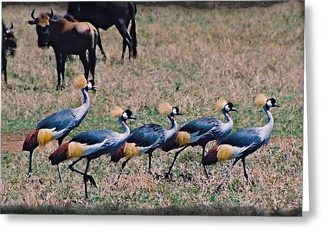 Strutting Crested Cranes Greeting Card