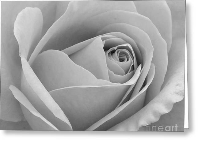 Greeting Card featuring the photograph Study In Black And White by Cindy Manero