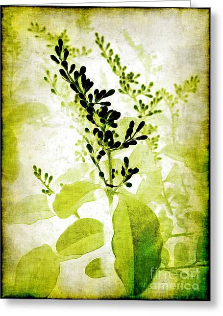 Study In Green Greeting Card by Judi Bagwell