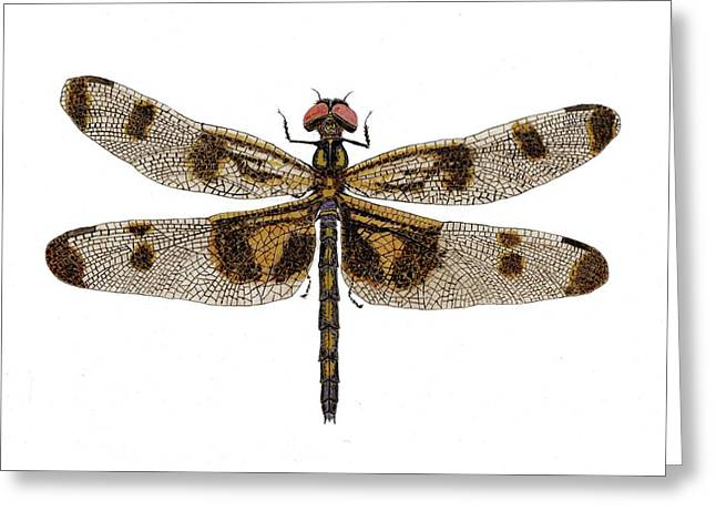 Greeting Card featuring the painting Study Of A Banded Pennant Dragonfly by Thom Glace
