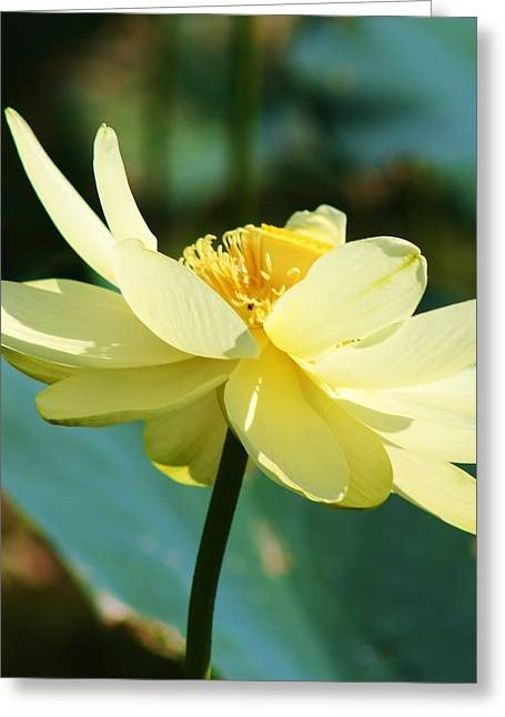 Greeting Card featuring the photograph Stunning Water Lily by Bruce Bley