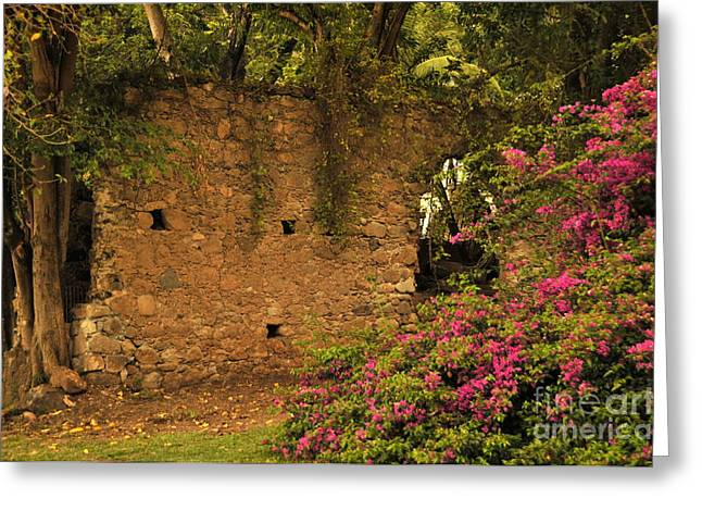 Sugar Mill Of The Past In St. Lucia Greeting Card