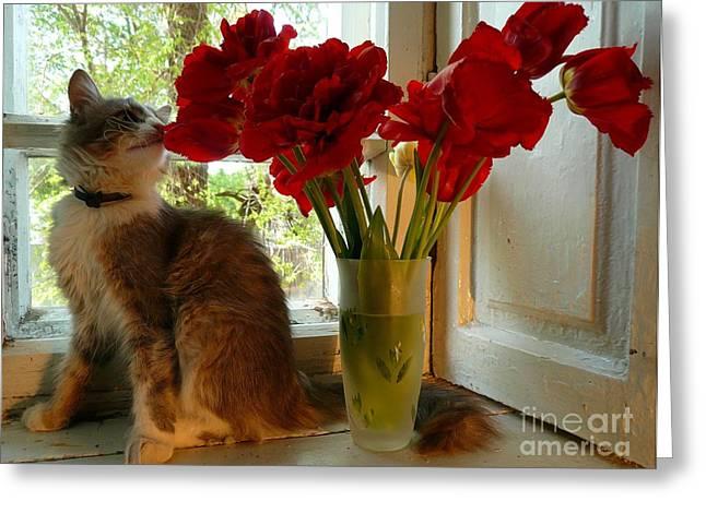 Summer - Cat 1 Greeting Card by Alisa Tek