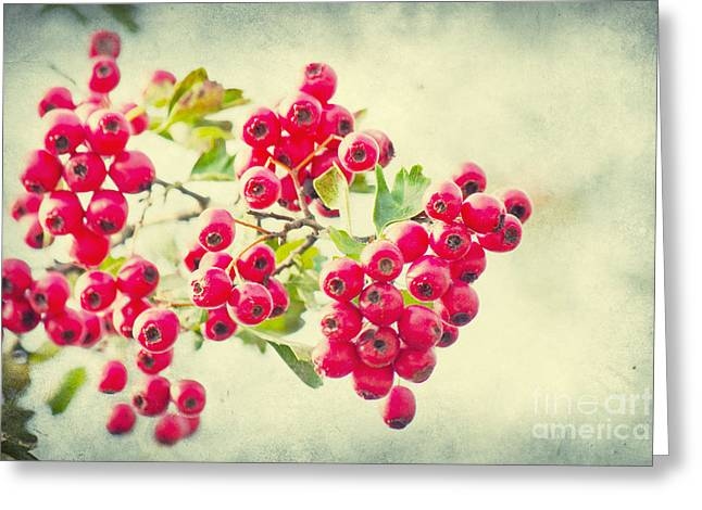 Summer Berries Greeting Card by Angela Doelling AD DESIGN Photo and PhotoArt