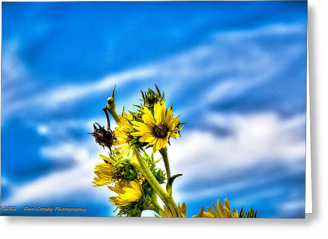 Summer Blooms Greeting Card by Dan Crosby