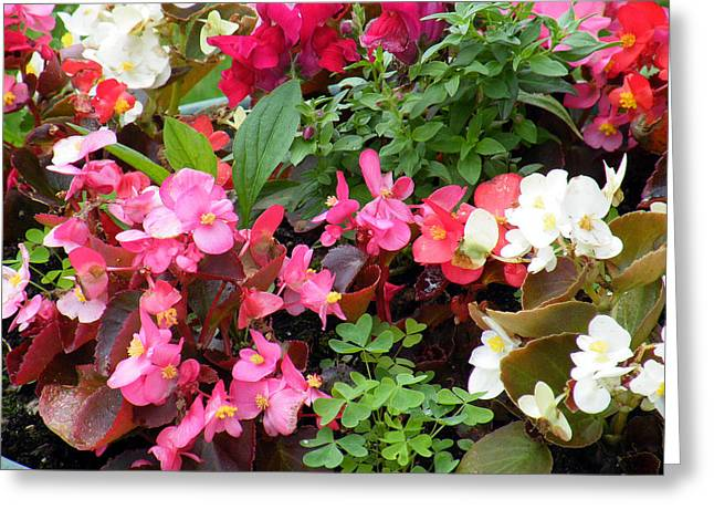 Summer Bouquet Greeting Card by Vicky Tarcau