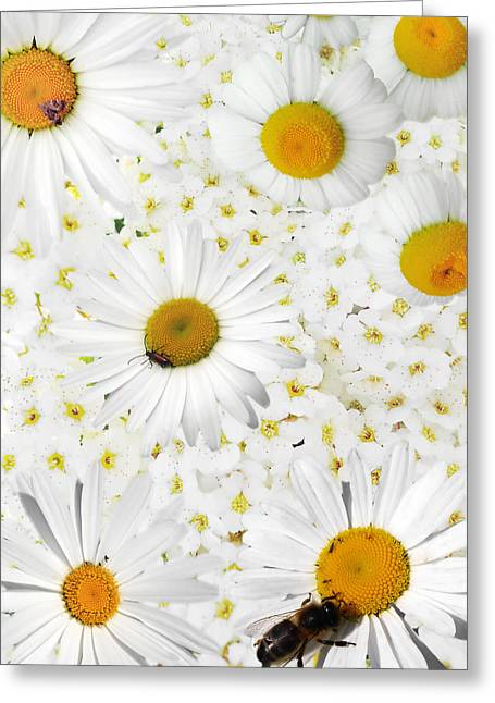 Greeting Card featuring the photograph Summer Collage With Camomiles And Insects by Aleksandr Volkov