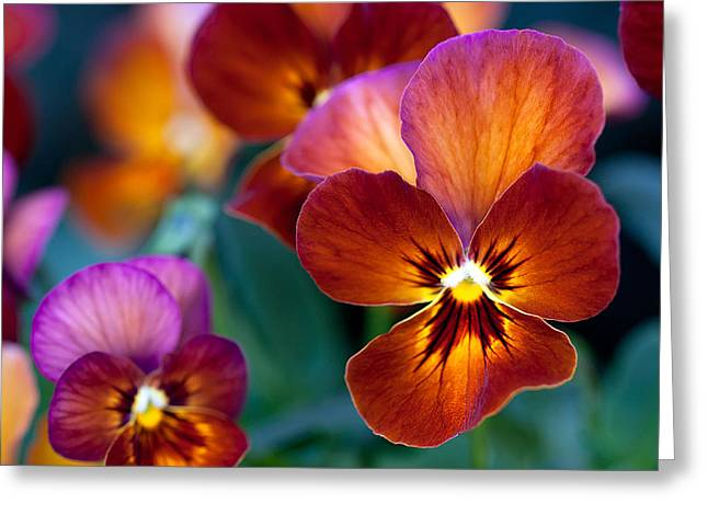 Greeting Card featuring the photograph Summer Colors by Anna Rumiantseva