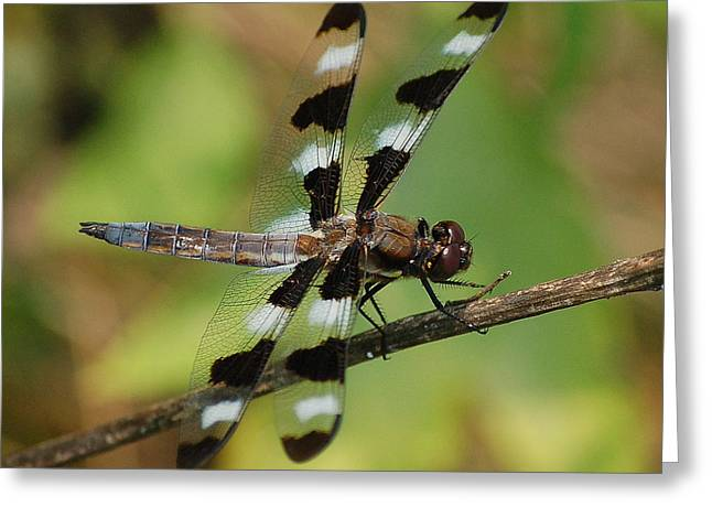 Summer Dragonfly Greeting Card